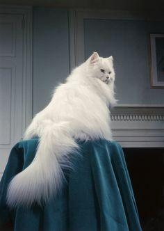 Cat Content: Sind das die besten Katzenbilder aller Zeiten? - BRIGITTE