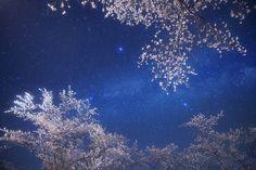Cherry blossom galaxy | Flickr - Photo Sharing!