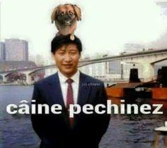 Caine pechinez Bmw E46, Funny Pictures, Funny Memes, Humor, Comics, Cute, Fictional Characters, Romania, Random
