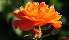 Bilder Hintergrundbilder herunterladen kostenlos Bild 1024 x 600 Blumen