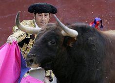 Notiferias Toros en Venezuela y el Mundo: ¿Conoces las querencias del toro?