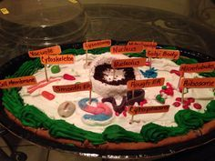 Animal Cell Project #diy