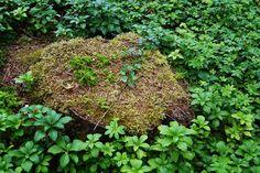 Park Seleger Moor, czyli czy warto zapłacić za kontakt z naturą? Switzerland, Herbs, Park, Photography, Photograph, Fotografie, Herb, Parks, Photo Shoot