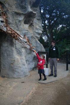 Taronga Zoo Roar & Snore >> 10 Weird Attractions in Sydney http://thingstodo.viator.com/sydney/weird-attractions-in-sydney/