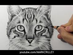 How to Draw a Cat [Narrated Step-by-Step Tutorial] - YouTube