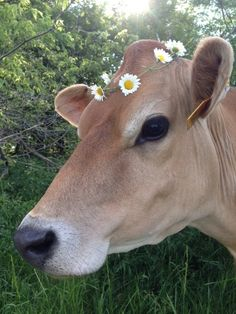 New post on afairyheart Cute Baby Cow, Baby Cows, Cute Cows, Cute Creatures, Beautiful Creatures, Animals Beautiful, Nature Animals, Farm Animals, Animals And Pets