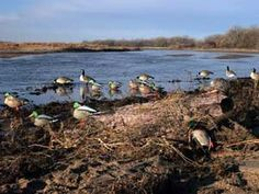 4 Great Decoy Spreads for Ducks Hunting Tips, Hunting Stuff, Waterfowl Gear, Irish Water Spaniel, Dove Hunting, Summer Fun For Kids, Duck Decoys, Rafting, Ducks