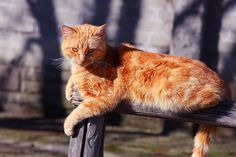 Cat on a fence by Marite2007, via Flickr