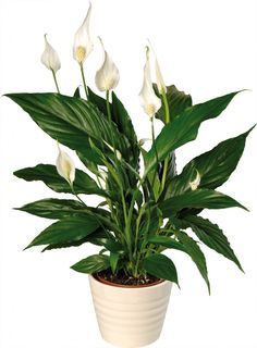 Plants that are good for the office - creates a positive work environment.