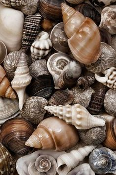 """One cannot collect all the beautiful shells on the beach."" Anne Morrow Lindbergh"