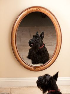 Oh hey there. Just checking how I look. Mirror, mirror, on the wall...