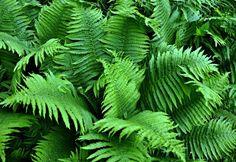 Így legyen a kerted árnyékos része is buja és virágzó Cool Plants, Air Plants, Indoor Plants, Gardenias, Begonia, Fern Plant, Plant Leaves, Shade Landscaping, Shade Garden Plants
