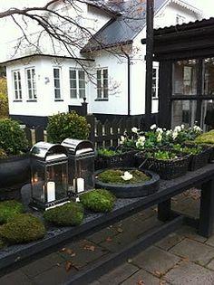 Decorate with green moss Love Garden, Dream Garden, Home And Garden, Black Garden, Outside Living, Outdoor Living, Outdoor Decor, Garden Cottage, Garden Landscape Design