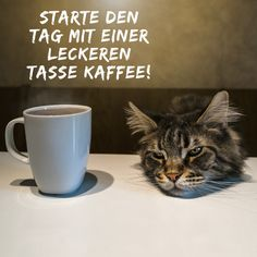 Tableware, Instagram, Great Pictures, Funny Pics, Kaffee, Dinnerware, Tablewares, Dishes, Place Settings
