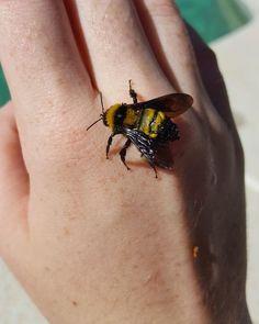 Imagem de bee, aesthetic, and animal Nezumi No 6, Photowall Ideas, Carpe Koi, Peculiar Children, Foto Art, Save The Bees, Mellow Yellow, Dragon Age, Raven