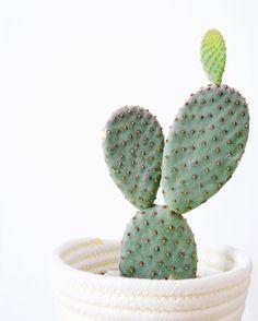 Cactus therapy EnCoursdeCréation •