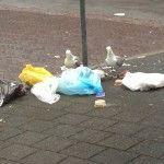 Gemeente Den Haag verliest strijd tegen meeuwenoverlast - Den Haag FM