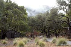 Oak Trees - ELLEDecor.com