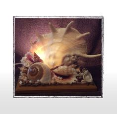 Handmade X-Large Truncata Lambis Seashell Table Night Accent Light, Beach/Nautical/Coastal Decor,  Wedding/Anniversary/House Warming Gift by Eagle414 Sea Shell Creations, $89.95 USD