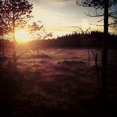 Autumn morning in Finnish swamp.