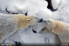 PHOTOS. Ours polaire: 10 clichés magnifiques pour la journée internationale consacrée à l'animal