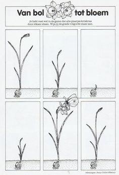 Opdrachtkleurplaten Lente Werkbladen Pinterest Flower