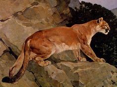 Carl Rungius | New York Zoological Print, Puma Cougar