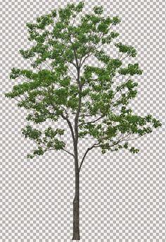 NHÀ THÔNG MINH: Thư viện cây Photoshop (phần 3) - 60 cây to bóng mát file chuẩn đã tách nền