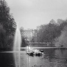 England, London, St. James Park, Blick auf Buckingham Palace Buckingham Palace, Niagara Falls, England, London, Black And White, Park, Nature, Travel, Black White