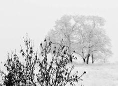 Snow, Tree, Bush, Winter, Landscape