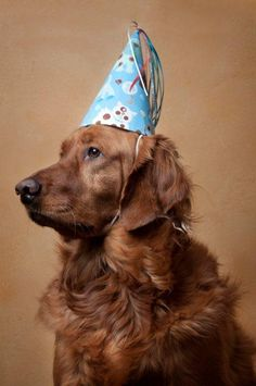Time to pawty! How adorable are these DIY hats for your dog's big day? (via BLovely Events)