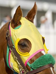 Horse racing: Rapid Redux, the best blue collar horse out there.