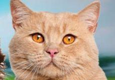 Pisicile si industria HoReCa - o legatura profitabila