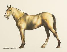 Horse - watercolor