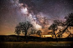 Cottonwood trees and the Milky Way on May 12, 2013. Credit and copyright: Randy Halverson/Dakotalapse.