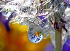 dandelion & dew