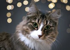 tips for taking great holiday pet picutres