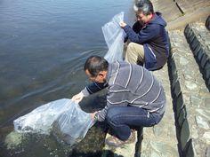 群馬の魚を育てる会ヤマメ稚魚配布・桃ノ木放流・赤城FF 2012,4,8イメージ 3