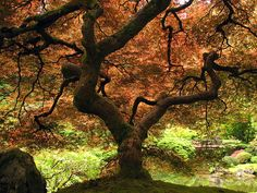 """Of all the wonders of nature, a tree in summer is perhaps the most remarkable; with the possible exception of a moose singing """"Embraceable You"""" in spats."""