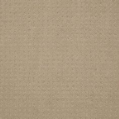 Color: 00102 Tusk In Savannah - EA024 Shaw ANSO Nylon Carpet Georgia Carpet Industries