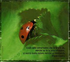Paulo Coelho - Cogli ogni opportunità che la vita ....