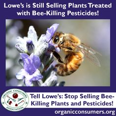 Home Depot is working to source plants that have not been treated with bee-killing neonicotinoids. But Lowe's Home Improvement has ignored it's consumers demands for bee-safe plants! Tell Robert Niblock, CEO of Lowe's: Stop Selling Bee-Killing Plants and Pesticides: http://orgcns.org/1r8PBQe