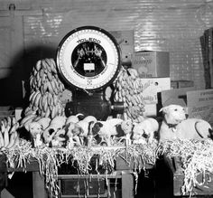 Puppies with bananas at Denunzio's Fruit Market, Louisville, Kentucky, :: Caufield & Shook Collection Jefferson Street, Louisville Kentucky, Back In The Day, Historical Photos, Old Photos, Bananas, Puppies, History, People