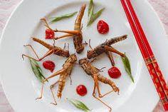 insectos comestibles mexico - Google Search