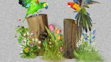 Meeting of friends creation art parrots two