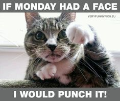 If monday had a face | Very Funny Pics
