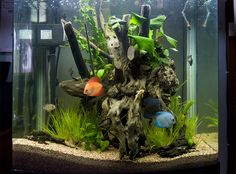 Aquarium and Fish - Catch all Fresh & Salt water | Gamers With Jobs