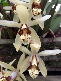 Orchids 2016, Kew by AS