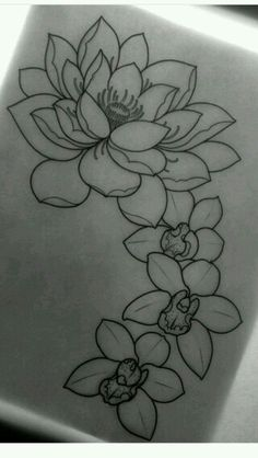 Lotus and orchid, beautiful