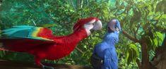 Film Rio, Rio Movie, Computer Animation, Animation Film, Cartoon Movies, Cartoon Characters, Parrot Cartoon, Blue Sky Studios, Rio 2